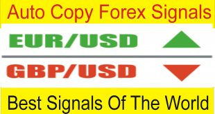 Auto Copy Best Forex Signals of The World | Copy Direct Live Trades Tani Forex Tutorial in Urdu