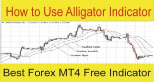 How To Use Alligator Forex Trading Indicator
